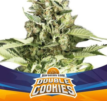 SensorySeeds Autoflowering Double Cookies Plant