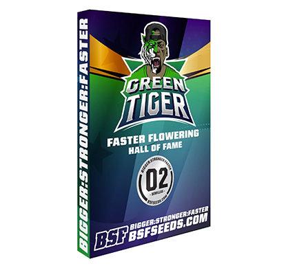 green-tiger-faster-flowering-buy-cannabis-seeds-uk