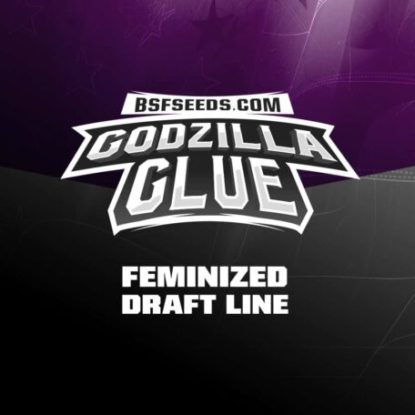 Label of Godzilla Glue feminized seeds