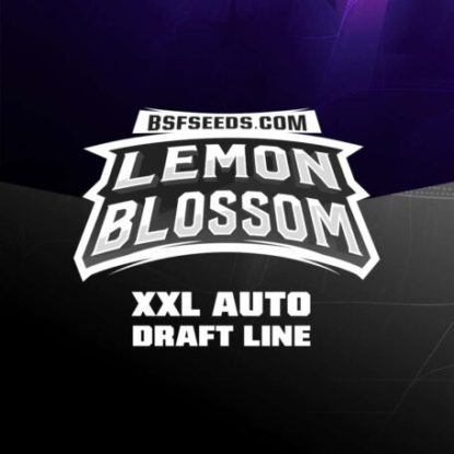 Label of Lemon Blossom auto flowers seeds
