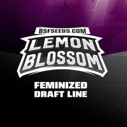 Label of Lemon Blossom feminized seeds