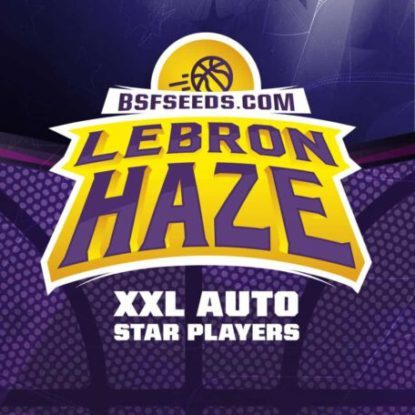 Logo of Lebron Haze auto flowers seeds