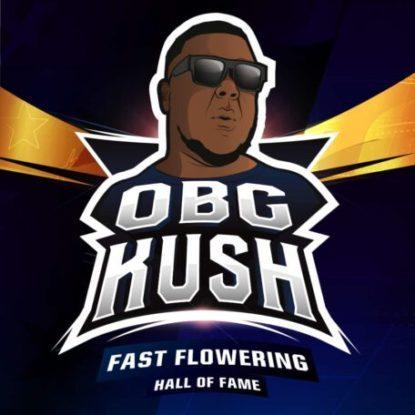 Obg Kush logo of fast flowering weed seeds