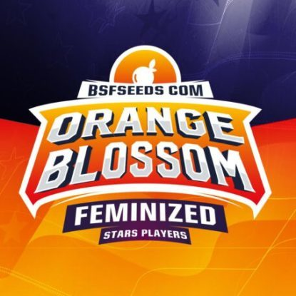 Logo of Orange Blossom feminized seeds