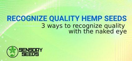 RECOGNIZE QUALITY HEMP SEEDS