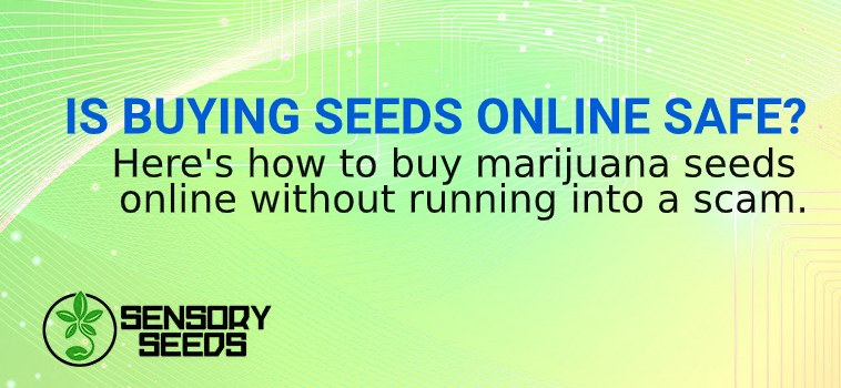 BUYING cannabis SEEDS ONLINE