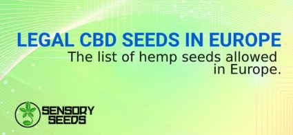 LEGAL CBD SEEDS IN EUROPE