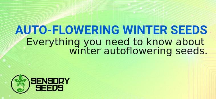 autoflowering winter hemp seeds