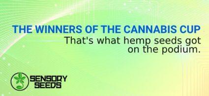 cannabis seeds winning cannabis cup