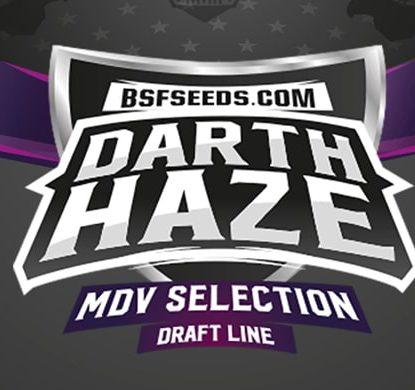 Darth haze logo of feminized seeds