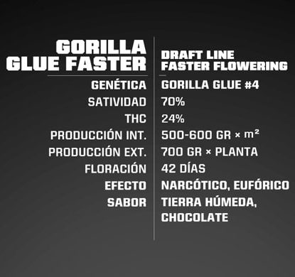 Gorilla Glue information of fast flowering weed seeds