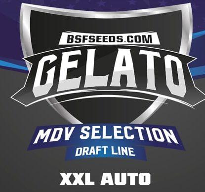 Gelato XXL of autoflowers seeds label