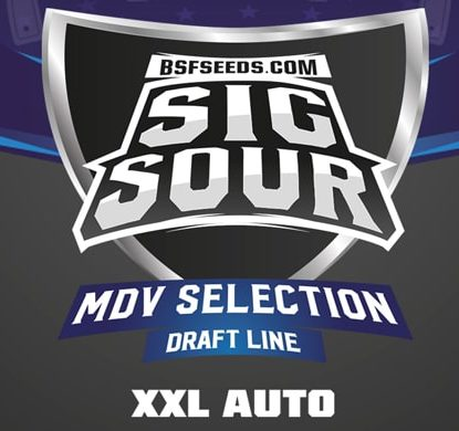 Sig Sour XXL logo of auto flowers seeds