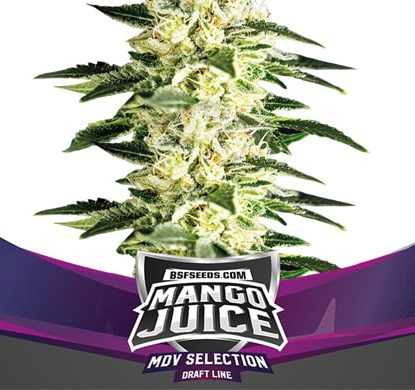 Weed Seeds Mango Juice