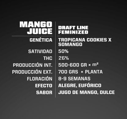 Mango Juice feminized seeds description