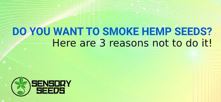 smoke cannabis seeds