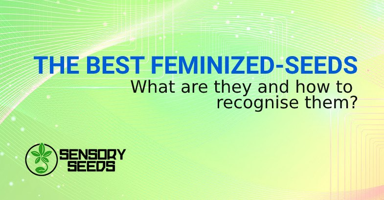 BEST FEMINIZED SEEDS