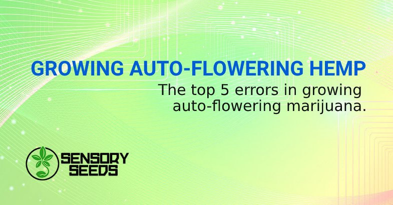 ERRORS IN GROWING AUTO FLOWER seeds