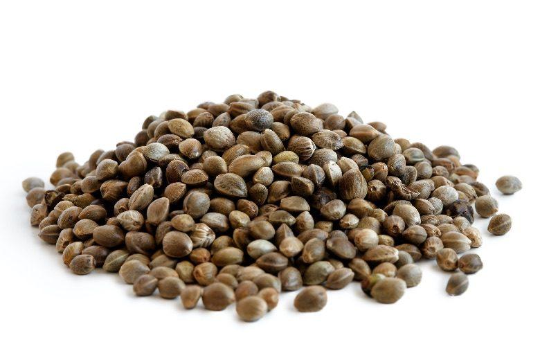 best feminized seeds BSF