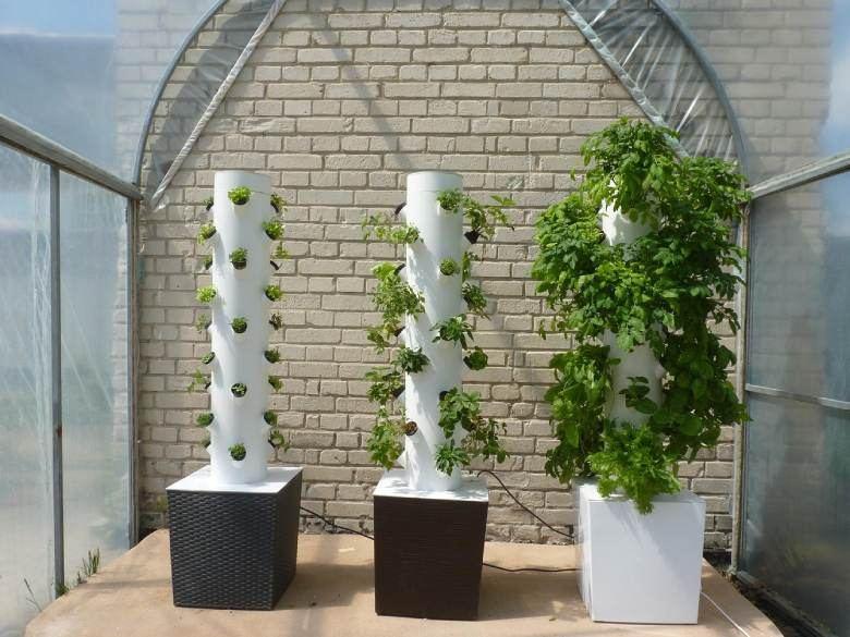 cannabis seeds and aeroponics