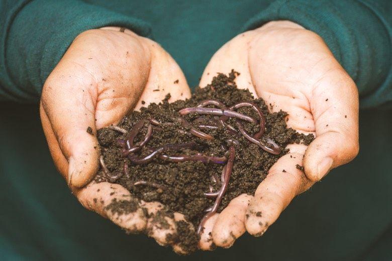 organic fertilizers for marijuana seeds