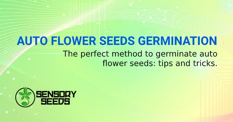 AUTO FLOWERWEED SEEDS GERMINATION