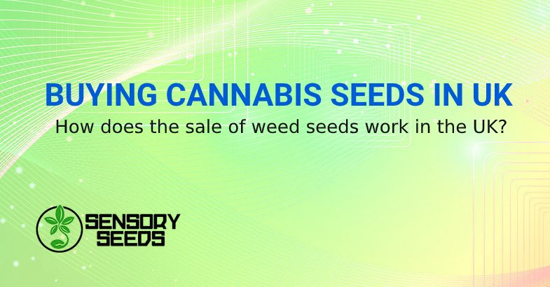 BUYING CANNABIS SEED IN UK