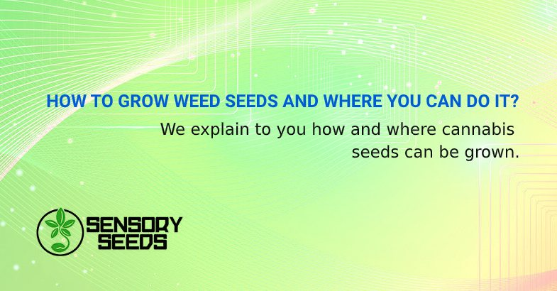 HOW TO GROW WEED SEEDS