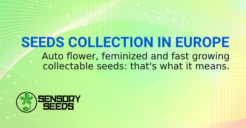 MARIJUANA SEEDS COLLECTION IN EUROPE