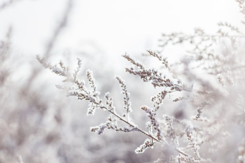 auto flower seeds in winter