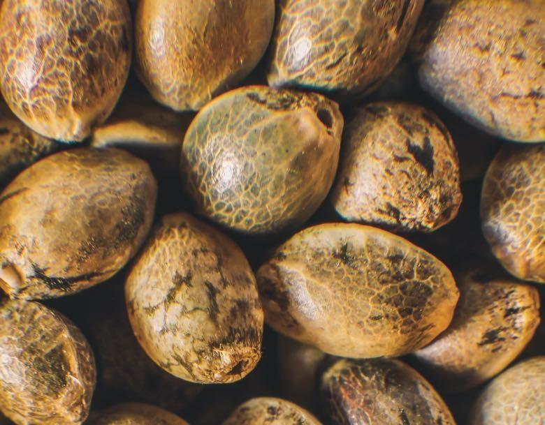 uses of cannabis seeds