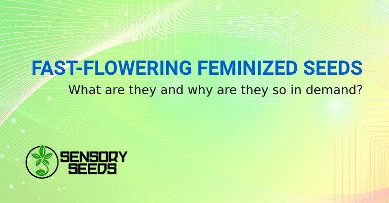 FAST FLOWERING FEMINIZED SEEDS