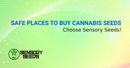 SAFE PLACES TO BUY CANNABIS SEEDS