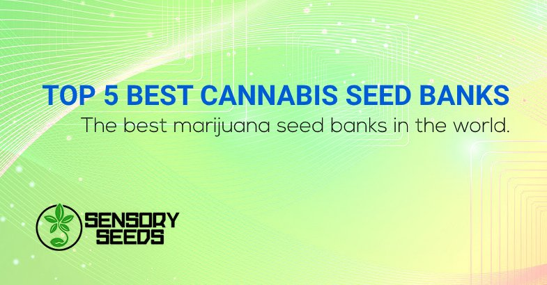 Top 5 best cannabis seed banks