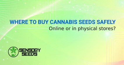 WHERE TO BUY CANNABIS SEEDS SAFELY
