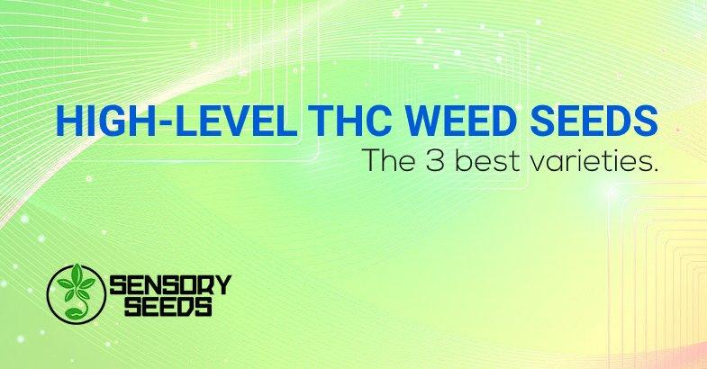 high-level THC marijuana seeds