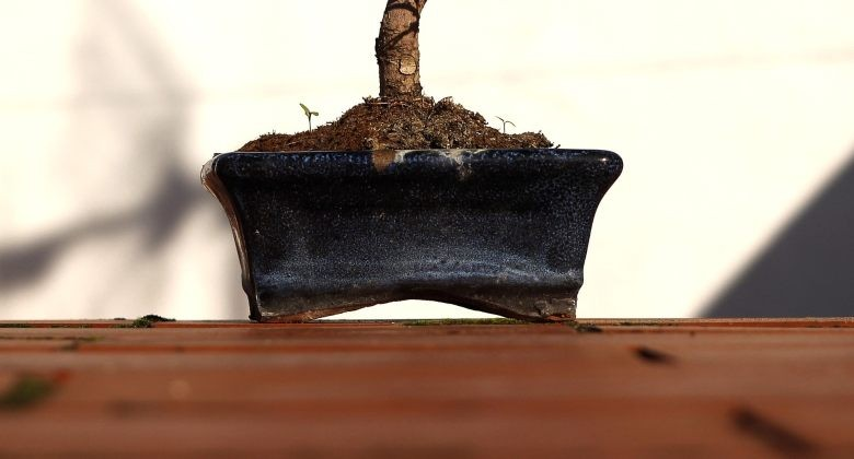 pot for growing bonsai from weed seeds