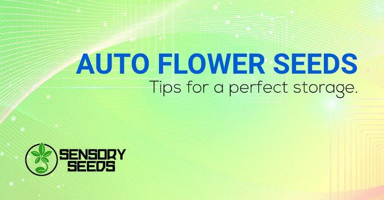 Auto flower cannabis seeds perfect storage