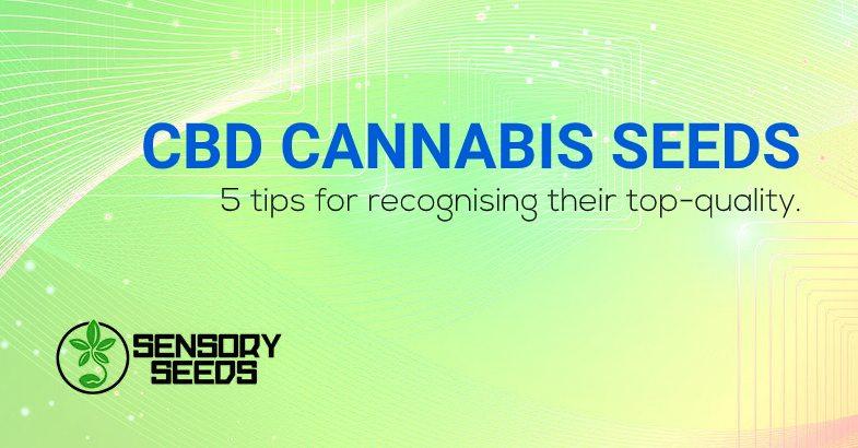 CBD cannabis seeds top quality
