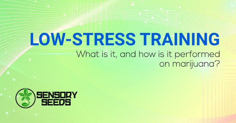 Low-stress Training what is it