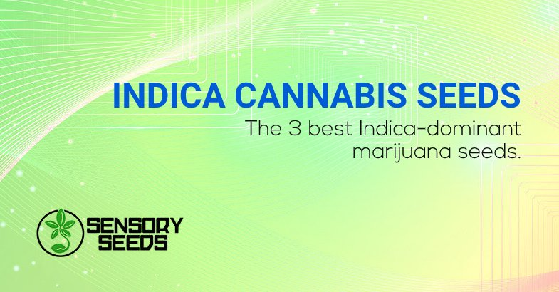 The 3 best Indica cannabis seeds