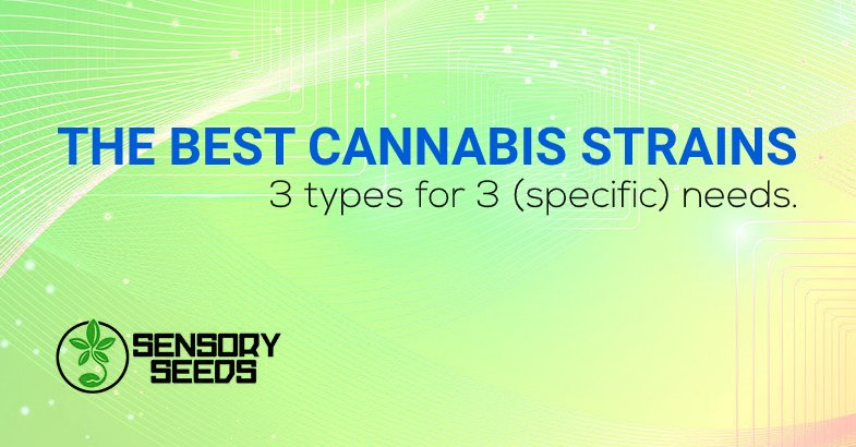 What are the best cannabis strains