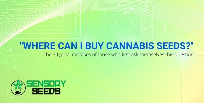 """The 3 typical mistakes of those who first ask themselves """"Where can I buy cannabis seeds?"""""""