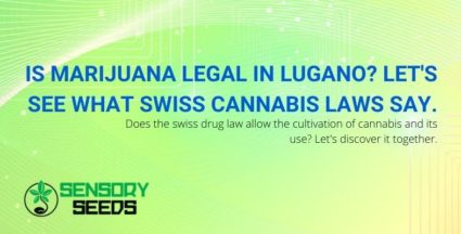 Let's find out about the Swiss cannabis laws in Lugano.