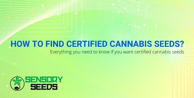 How to find certified cannabis seeds?