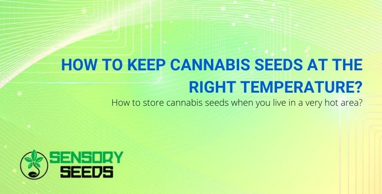 How to keep cannabis seeds at the right temperature?