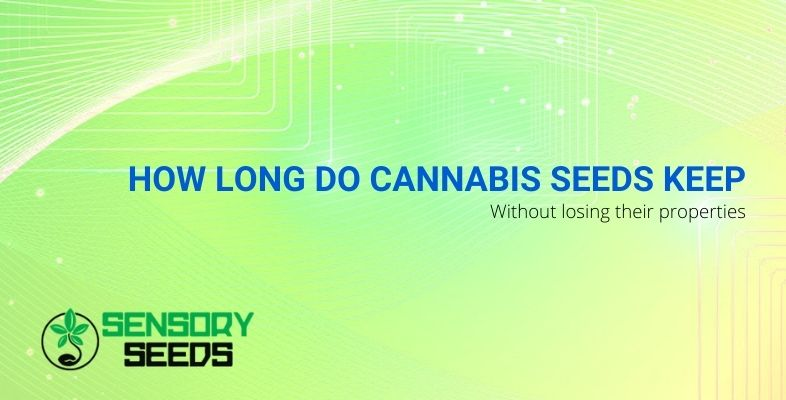 How long do cannabis seeds keep without losing their properties?