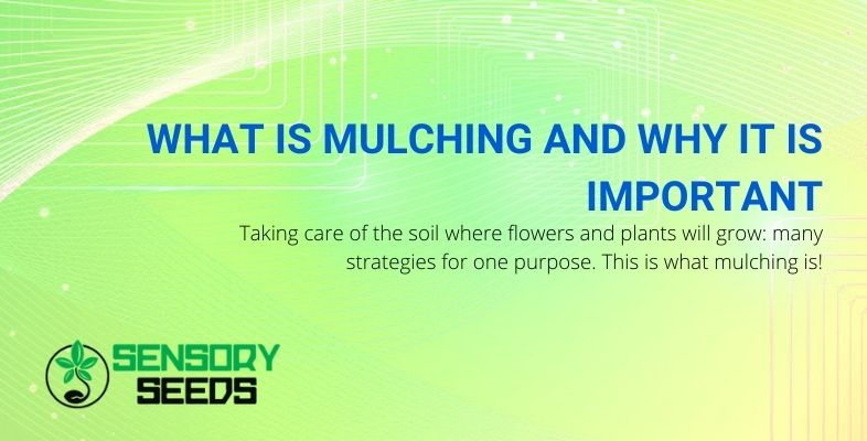 Why is mulching important? What's this?