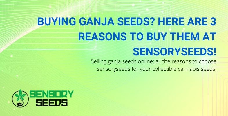 Buying ganja seeds at Sensoryseeds? Here are three reasons.
