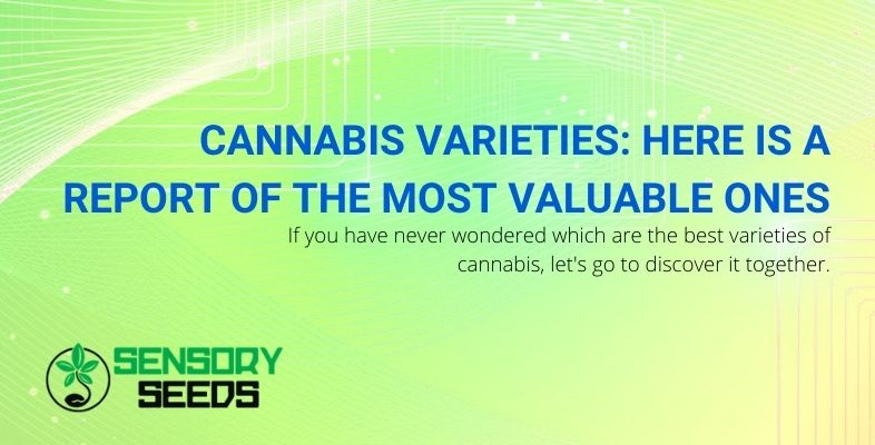 Report of the finest cannabis strains